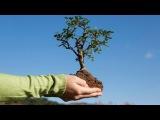 Посадка деревьев бархата. Новости. GuberniaTV
