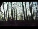 Мои шаги ещё слышны - Автор Диана Горная музыка Слава Стади исполнитель Ольга (parus)