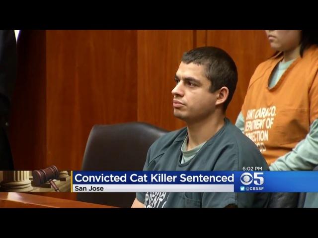 16 лет тюрьмы за убийство 21 кота