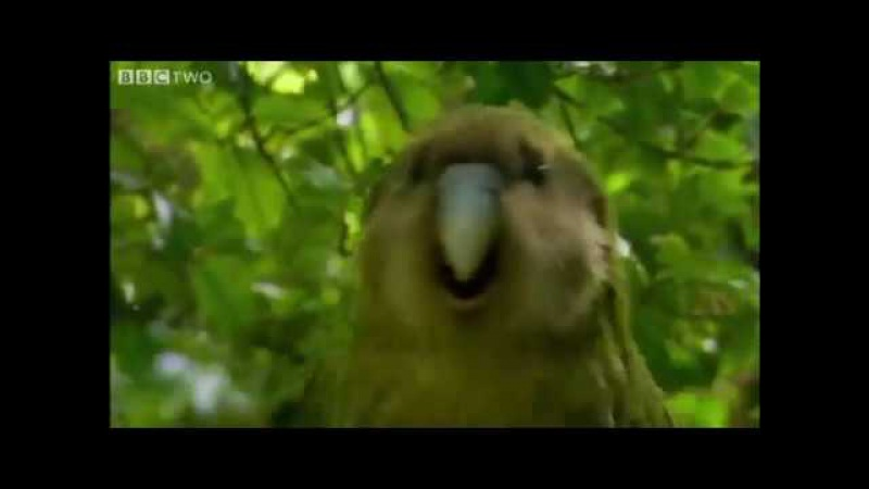 Shagged by a rare parrot - MEME (Better Quality)