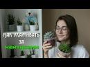 Как ухаживать за кактусами Как поливать кактусы ВСЕ кактусы цветут