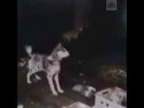 Питомник с десятками голодающих собак нашли в Твери