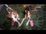 Берта (2-2,5 мес) и Лайда