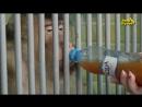 В красноярском зоопарке обезьян напоили безалкогольным глинтвейном