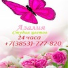 Азалия Доставка цветов. Цветы Барнаул
