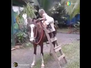 Пони для слабаков