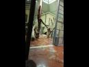 Отцы и дети в Будапештском зоопарке