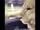 Хотели бы себе такого пассажира ?😎