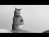 Я хочу себе такого кота