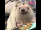 Приятного аппетита, ежик!