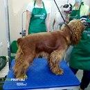 20 апреля 21г- Обучение стрижке собак Краснодар