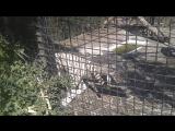 Ялта зоопарк
