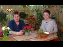Бальзамин самарский. Цветочная лавка