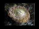 География 35. Обитатели морей и океанов. Часть 1 — Шишкина школа