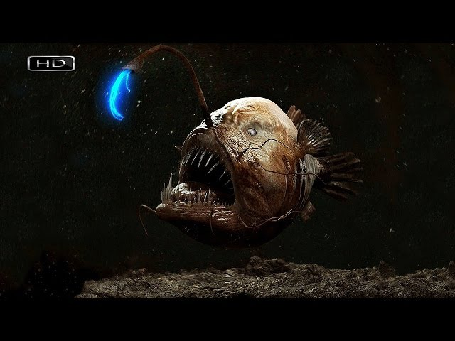 Водные ангелы или исчадия ада Глубоководный удильщик Голожаберник
