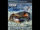 BBC Мир природы Из жизни крабов 2009 смотреть кино онлайн