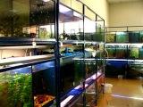 Декорации для аквариума httpgrotaqua.com