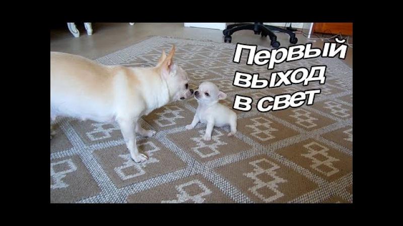 VLOG: Мы без холодильника / Наше утро / Пилот гуляет / Новости