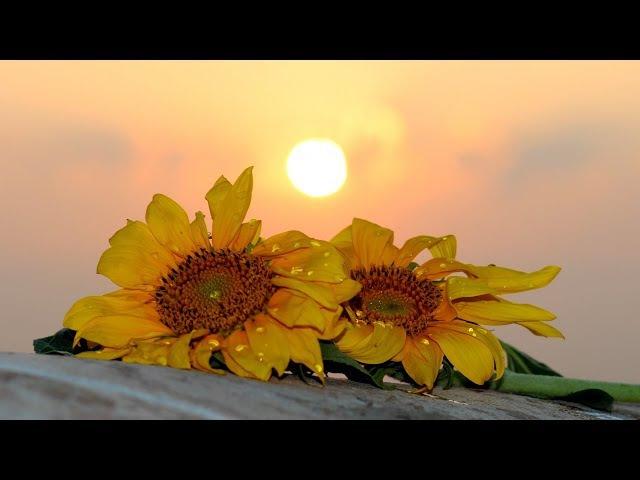Позитивная музыка Гитара Флейта Восток и Азия Positive Energy Relax