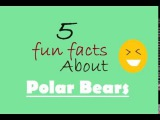 5 Fun Facts About Polar Bears