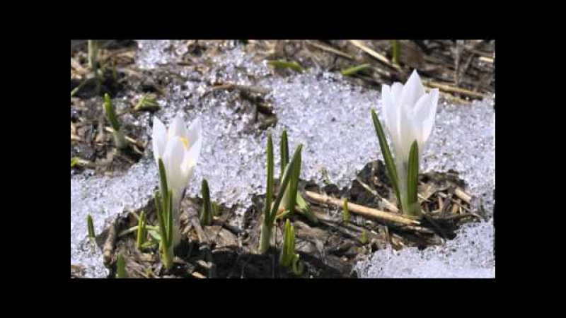 Amazing Spring video of snow receding, nature scenes with Llewellyn relaxation music