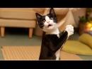 Забавные коты, смешные собаки и БЕШЕНЫЕ ПОПУГАИ
