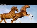 Золотые кони Хана Батыя/ Сокровища не найденные по сей день
