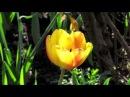 ВЕСНА The Song From A Secret Garden Песня для Таинственного сада