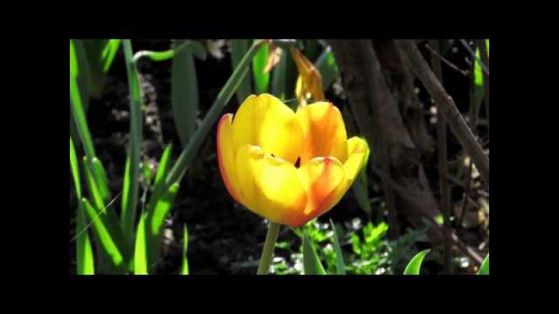 ВЕСНА - The Song From A Secret Garden - Песня для Таинственного сада.