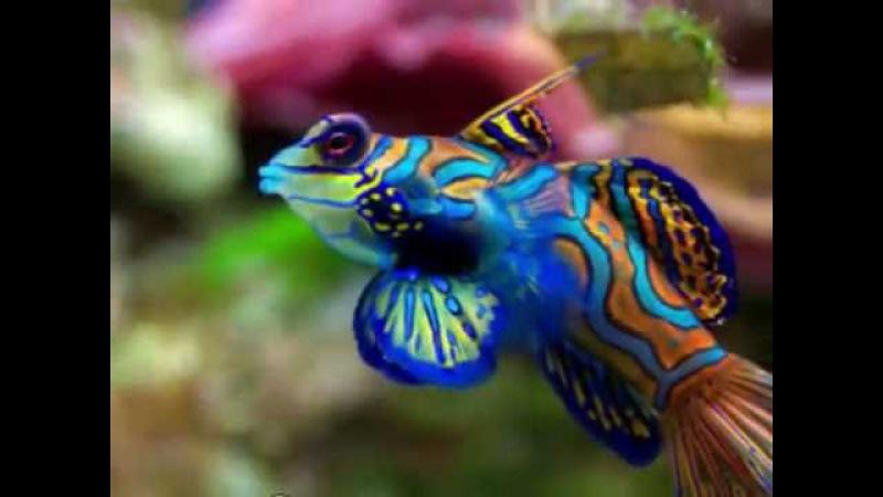 Топ 10 самых красивых видов рыб