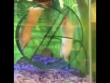 hamster  oh no