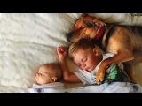 Собаки - очень преданные!))