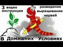 3 Часть. Инструкция выращивания червей в домашних условиях. Все секреты разведения дождевых червей.