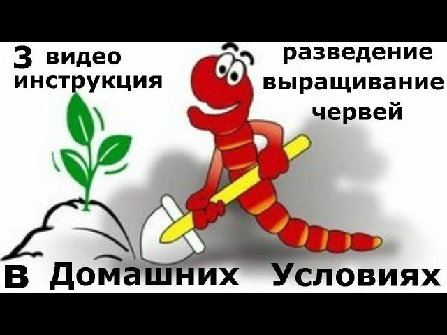 3 Часть. Инструкция выращивания червей в домашних условиях. Все секреты разведения дождевых червей. » Freewka.com - Смотреть онлайн в хорощем качестве