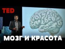 TED | Как ваш мозг решает, что красиво