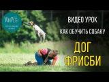 Дог фризби | Обучение дог фризби | Дрессировка собак