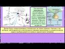 Лекция 11 Гипоталамус и гипофиз нейроэндокринная регуляция Либерины статины тропные гормоны Влияние гормонов на функции ЦНС