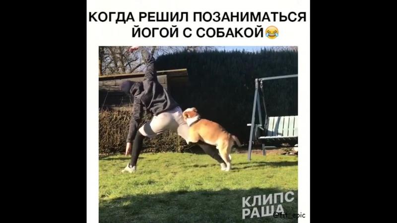 Решил позаниматься йогой с собакой