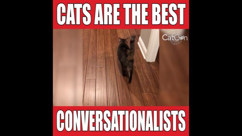 Кошки лучшие переговорщики