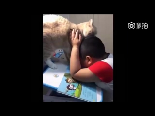 This kid is trying to do homework and his chubby cat is obviously not helping.