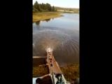 зарыбление карпом в Стремилово 4.08.17 (2)