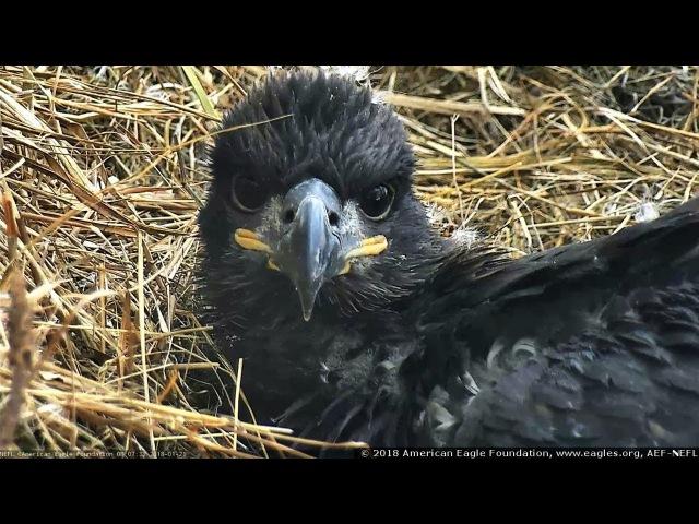 AEF-NEFL Eagles ~ Sky - 43 Days Old ~ 01·21·18