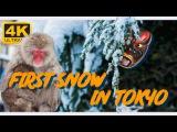 First snow in Tokyo 4K Ultra HD. Первый снег в Токио. Зима в Японии.