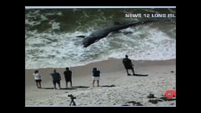 Гигантскую акулу вынесло на берег (Giant Shark Washes up on Beach)