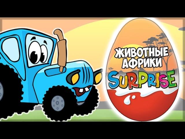 Синий трактор привез 6 шоколадных яиц с животными Африки Видео для детей
