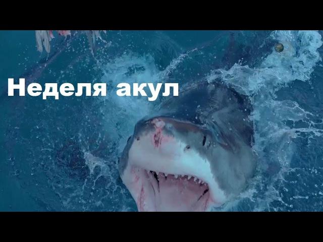 Неделя акул В клетке Discovery (2017)