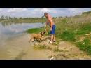 Джесси Собака которая любит купаться Jessie