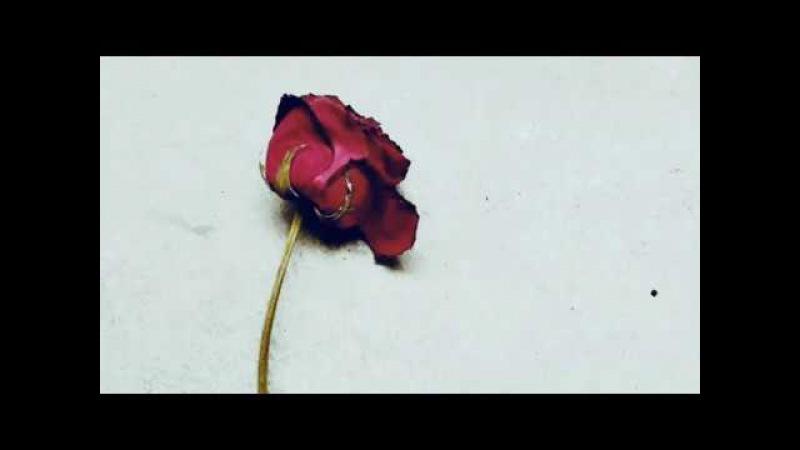 Кінәлама【Do Not Blame Me】『Cover』