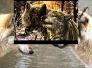 LikBes Моя Волчица