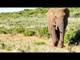 Photos of The Addo Elephant Park WoW Beautiful South Africa Wildlife
